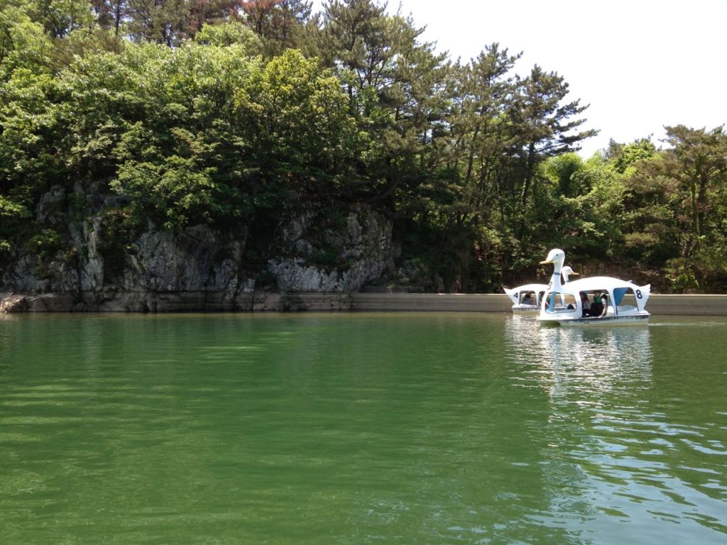 Geoje South Korea Swan Paddle Boat