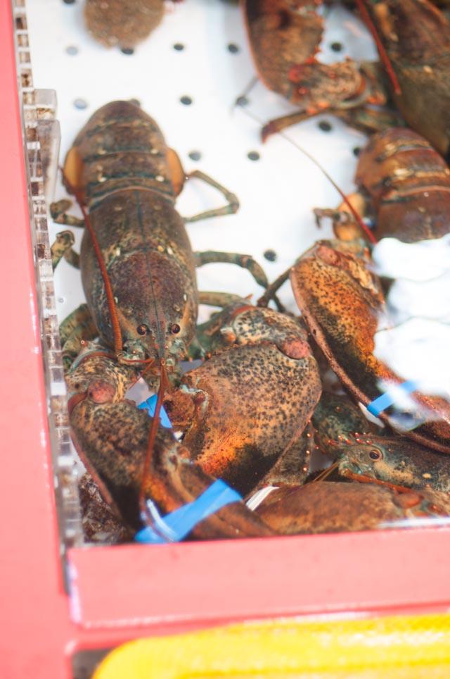 Touring Busan's Fish Market