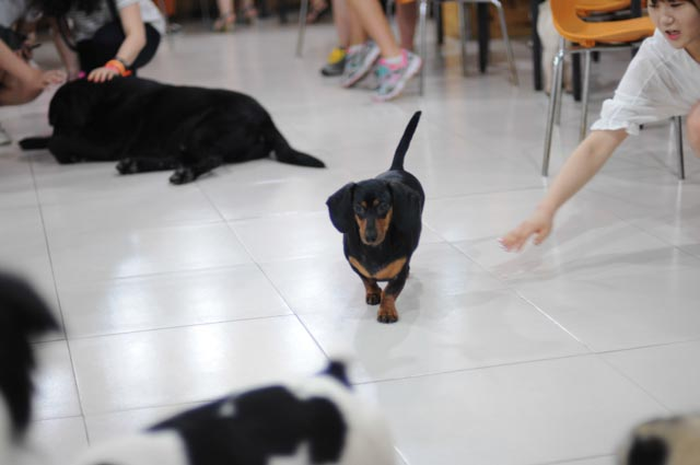 A dog cafe in Seoul