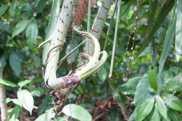 Sandakan Rainforest Discovery Center