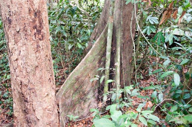 wpid-Borneo-Trip-248.jpg