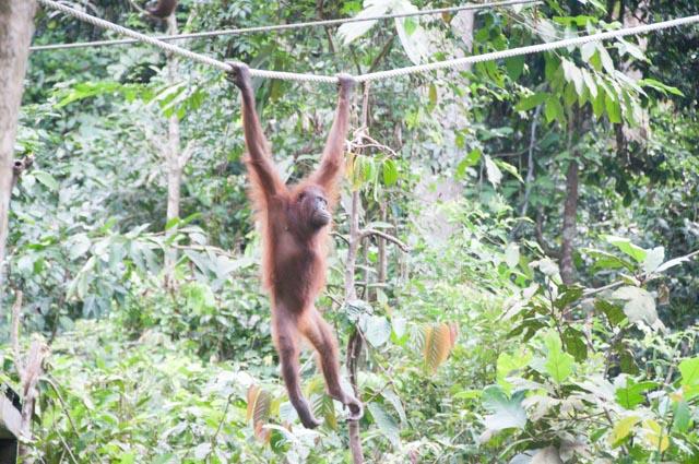 wpid-Borneo-Trip-249.jpg