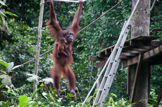 wpid-Borneo-Trip-250.jpg