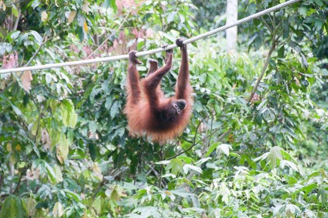 wpid-Borneo-Trip-252.jpg