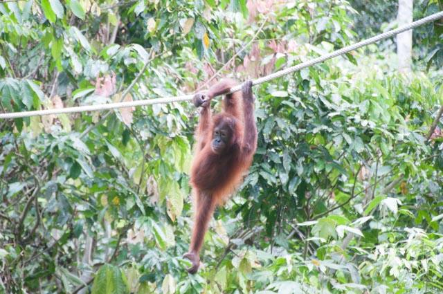 wpid-Borneo-Trip-253.jpg