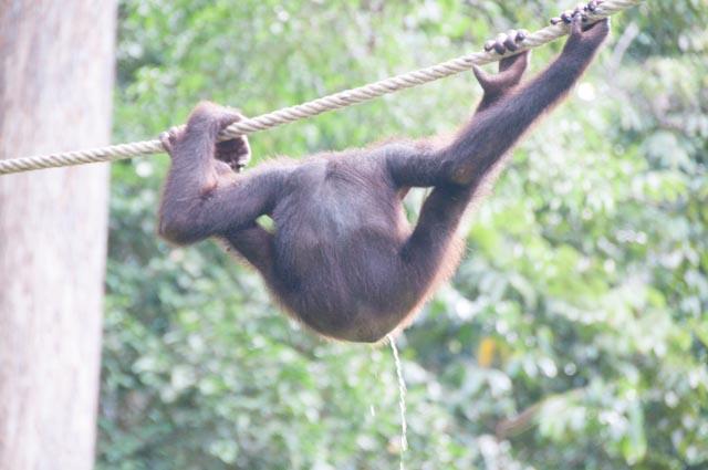 wpid-Borneo-Trip-254.jpg