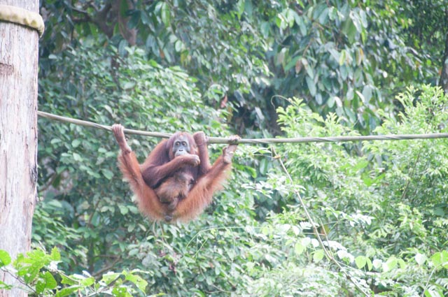 wpid-Borneo-Trip-257.jpg