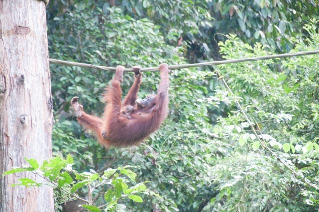 wpid-Borneo-Trip-258.jpg