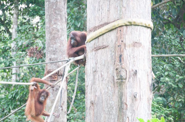 wpid-Borneo-Trip-259.jpg