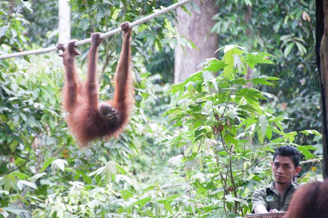 wpid-Borneo-Trip-260.jpg