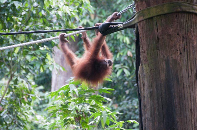 wpid-Borneo-Trip-261.jpg