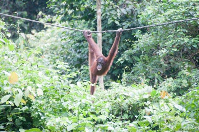 wpid-Borneo-Trip-262.jpg