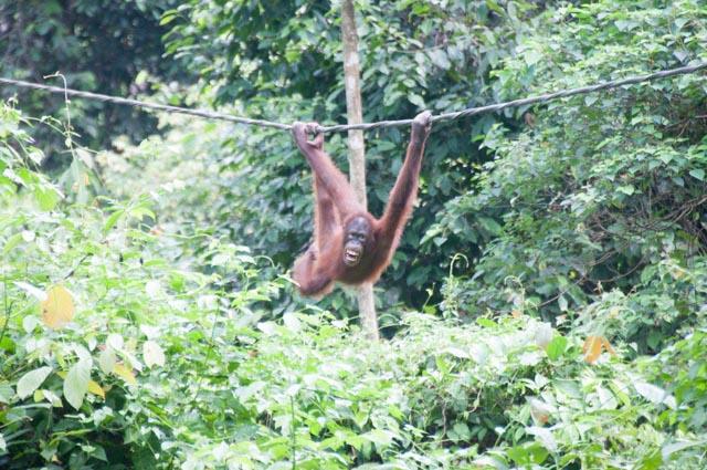 wpid-Borneo-Trip-263.jpg