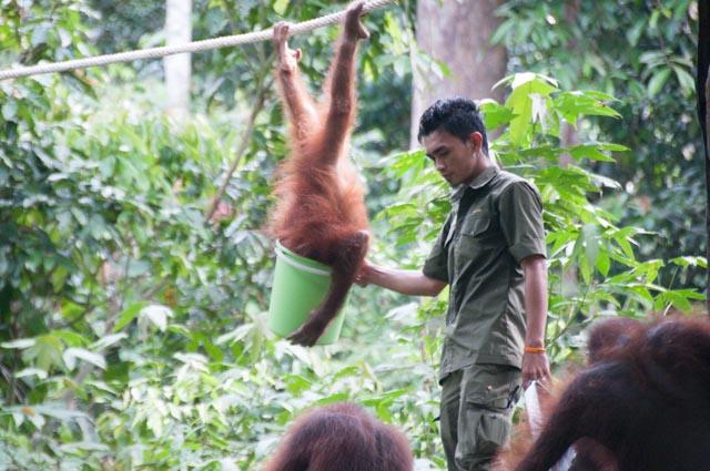 wpid-Borneo-Trip-264.jpg