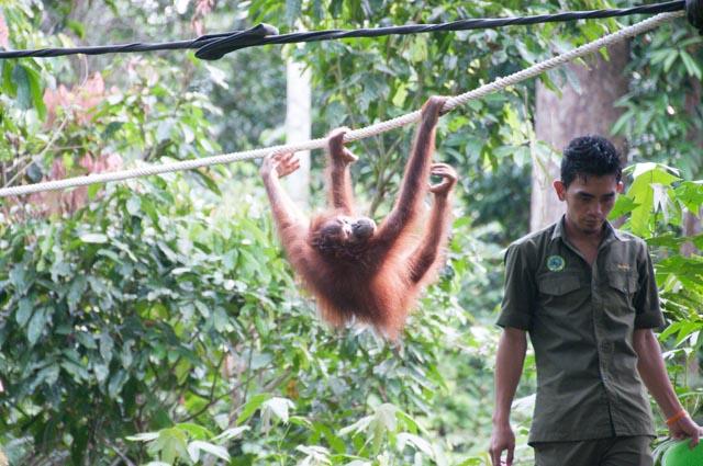 wpid-Borneo-Trip-265.jpg