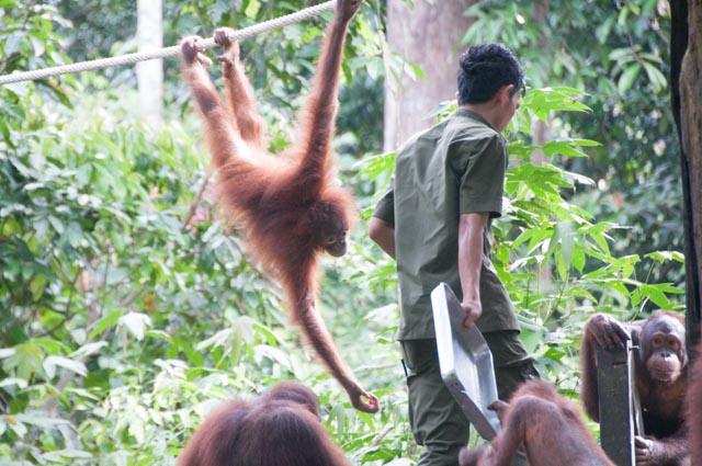 wpid-Borneo-Trip-266.jpg