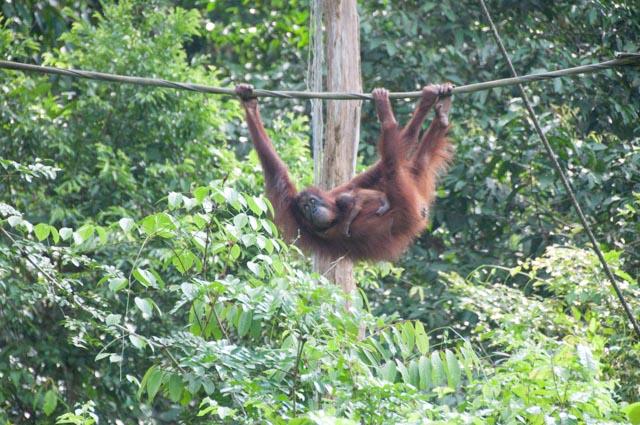 wpid-Borneo-Trip-267.jpg