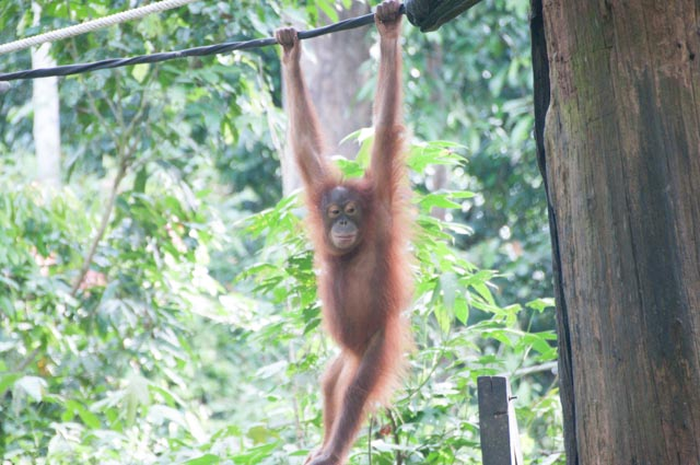 wpid-Borneo-Trip-268.jpg