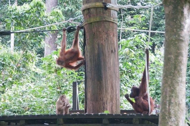 wpid-Borneo-Trip-269.jpg