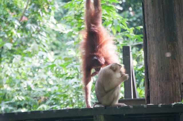 wpid-Borneo-Trip-270.jpg