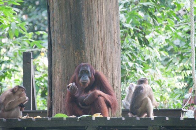 wpid-Borneo-Trip-274.jpg