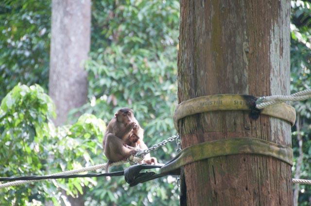 wpid-Borneo-Trip-276.jpg