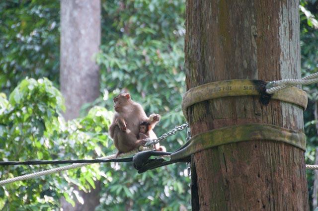 wpid-Borneo-Trip-277.jpg