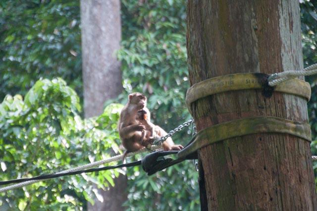 wpid-Borneo-Trip-279.jpg