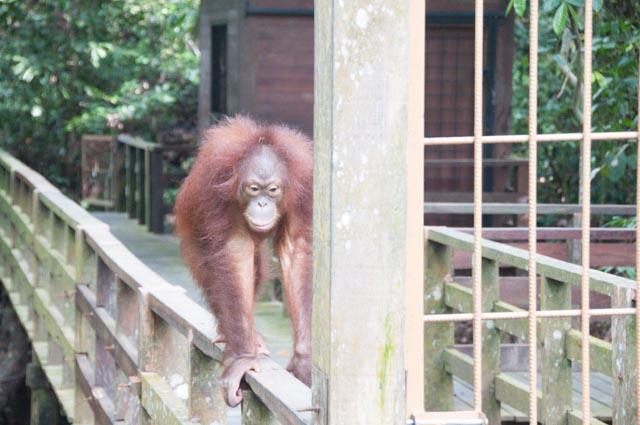 wpid-Borneo-Trip-280.jpg