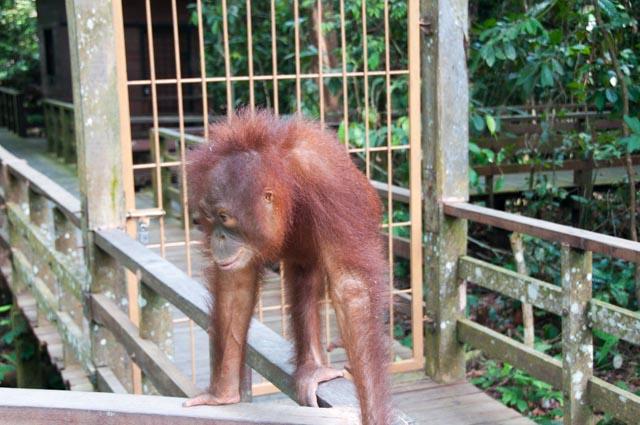 wpid-Borneo-Trip-281.jpg