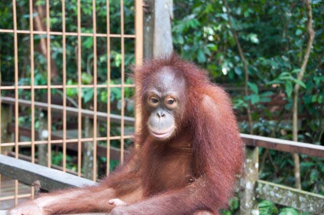 wpid-Borneo-Trip-282.jpg