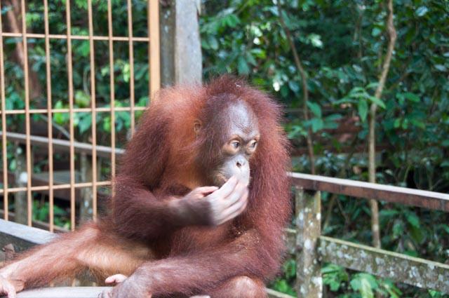 wpid-Borneo-Trip-283.jpg