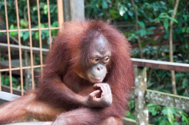 wpid-Borneo-Trip-284.jpg