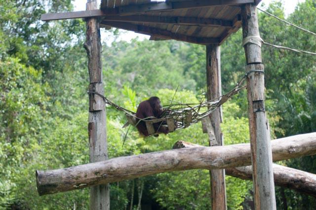Sandakan Zoo