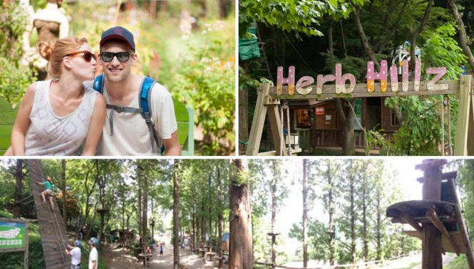 Herb Hillz