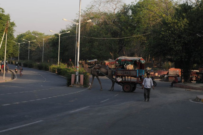 Camel Rides in Agra